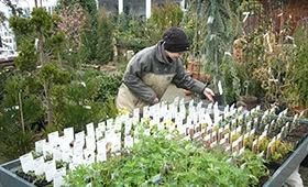 Gärtnerei-Auszubildende bei der Arbeit